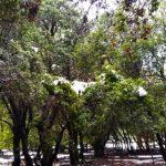 טיול ביער אודם והג'ובה הגדולה